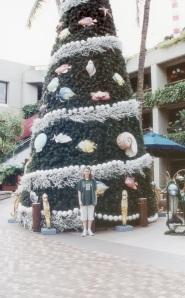 Árvore de Natal havaiana: conchas, peixes e nada de flocos de neve