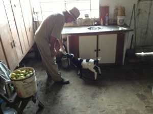 Durante a visita, recebemos uma amiga faminta (Foto: Priscila Dal Poggetto)