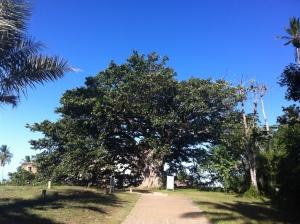 Praia do Forte, Bahia (Foto: Priscila Dal Poggetto)