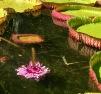 Jardim Botânico de Mauritius (1)