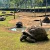 Jardim Botânico de Mauritius (2)